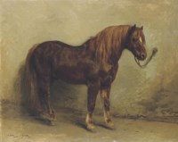 Tethered pony