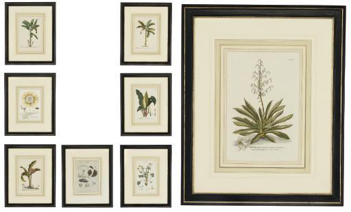 Arum, Cerus, Haemanthus, Musa and Yucca