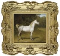 An Arab stallion in a landscape