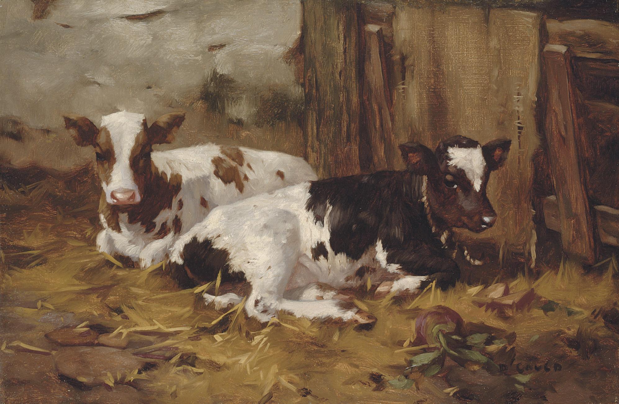 Resting calves