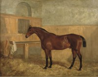 A bay hunter in a stable