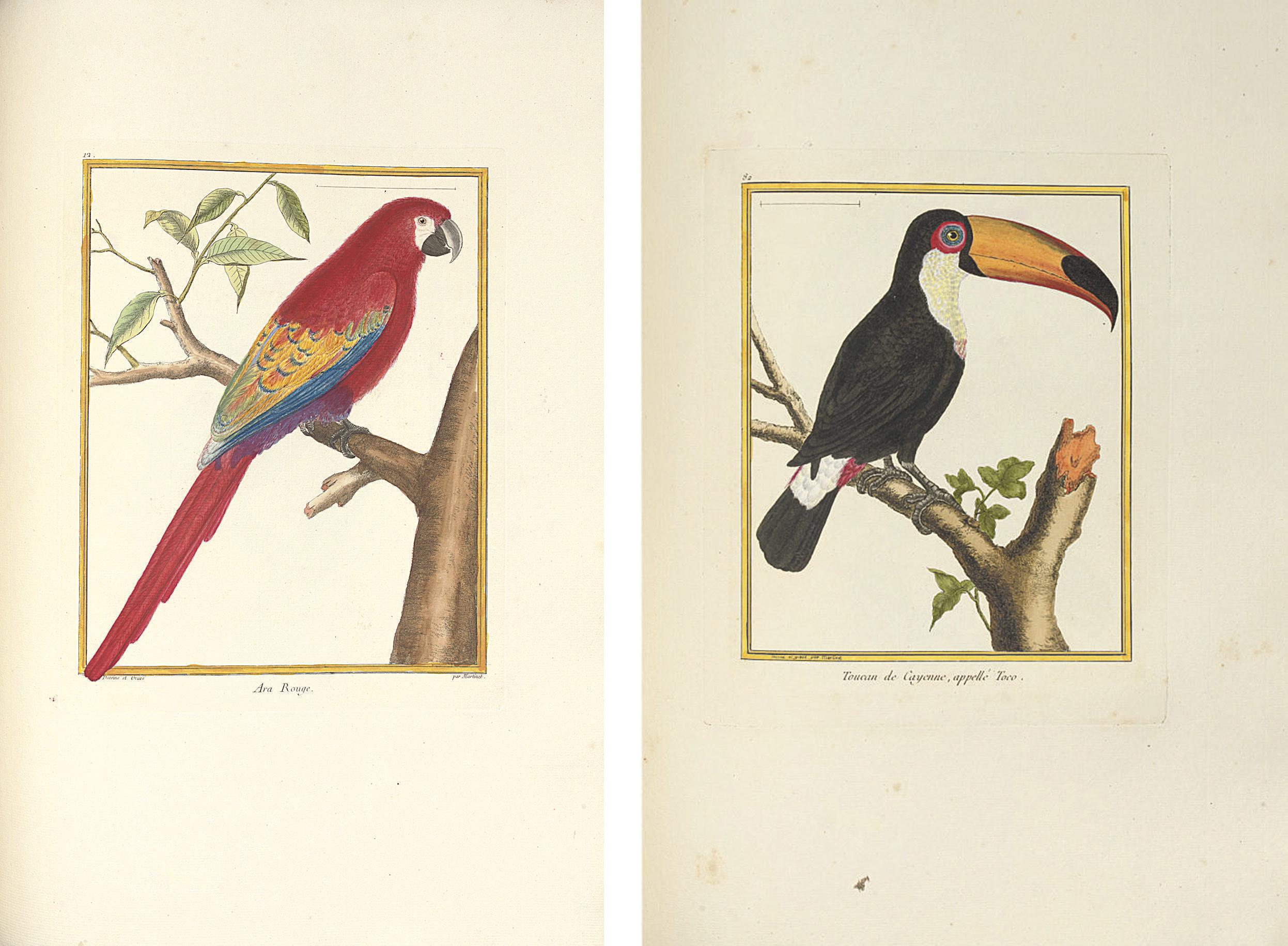 [BUFFON, Georges-Louis Marie Leclerc, comte de, (1707-1788) and François Nicholas MARTINET (c.1760-1800). Histoire Naturelle des Oiseaux. Paris: 1770-1786.]
