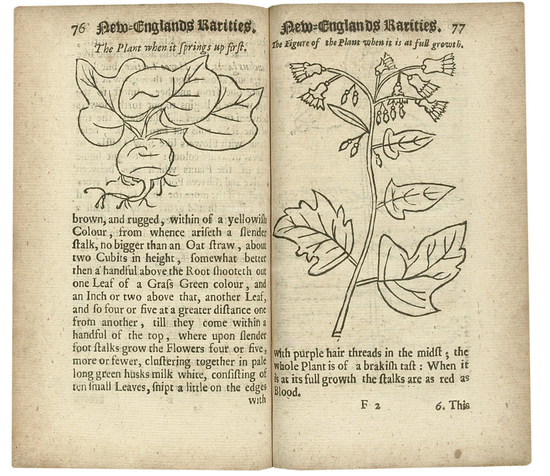 JOSSELYN, John (c. 1608-1704).