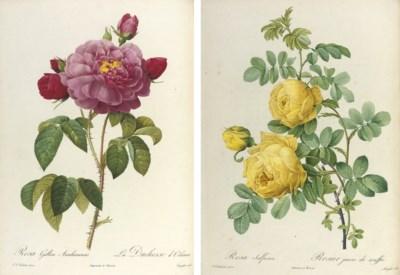 REDOUTÉ, Pierre-Joseph (1759-1