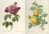 REDOUTÉ, Pierre-Joseph (1759-1840) and Claude Antoine THORY (1759-1827). Les Roses. Paris: Firmin Didot, 1817-1824.