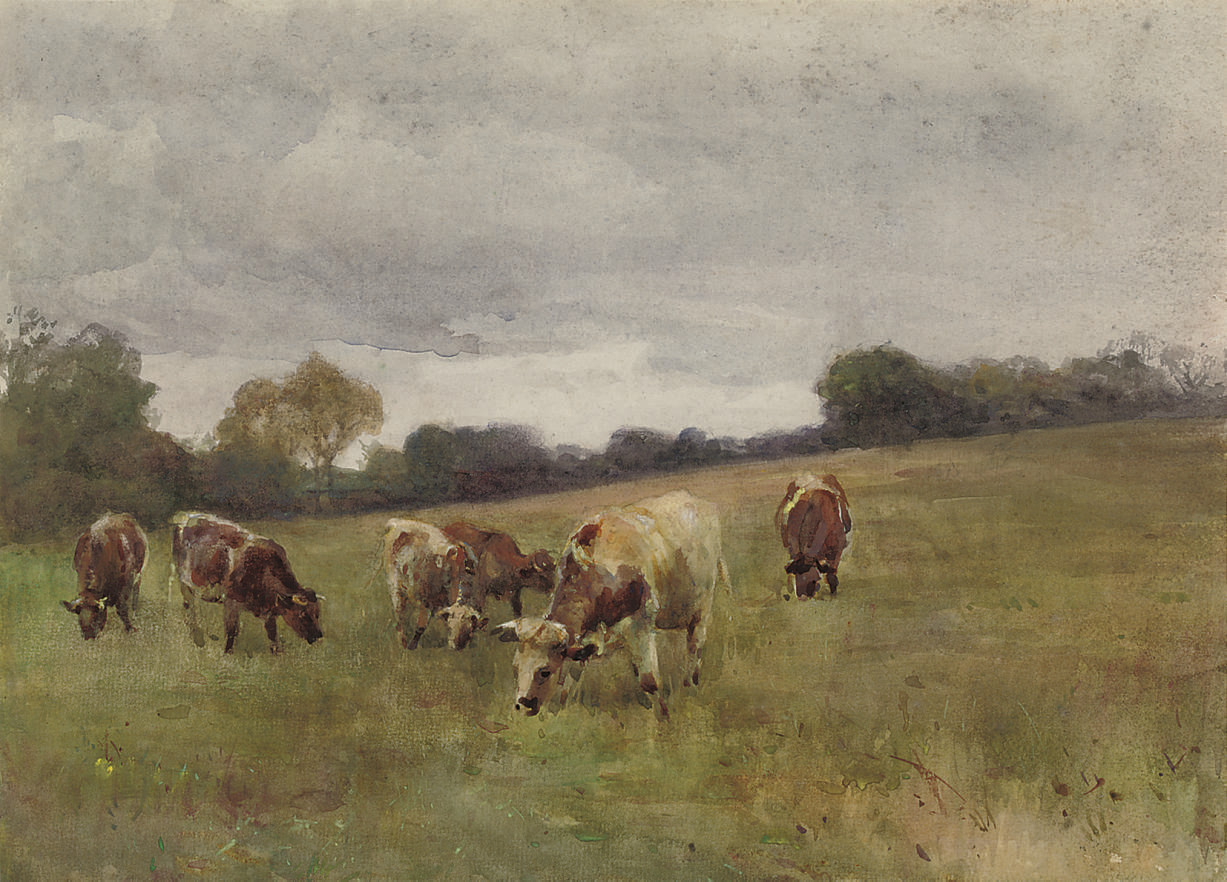 Cattle grazing, Kilmurry