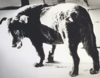 Stray Dog, Misawa, 1971