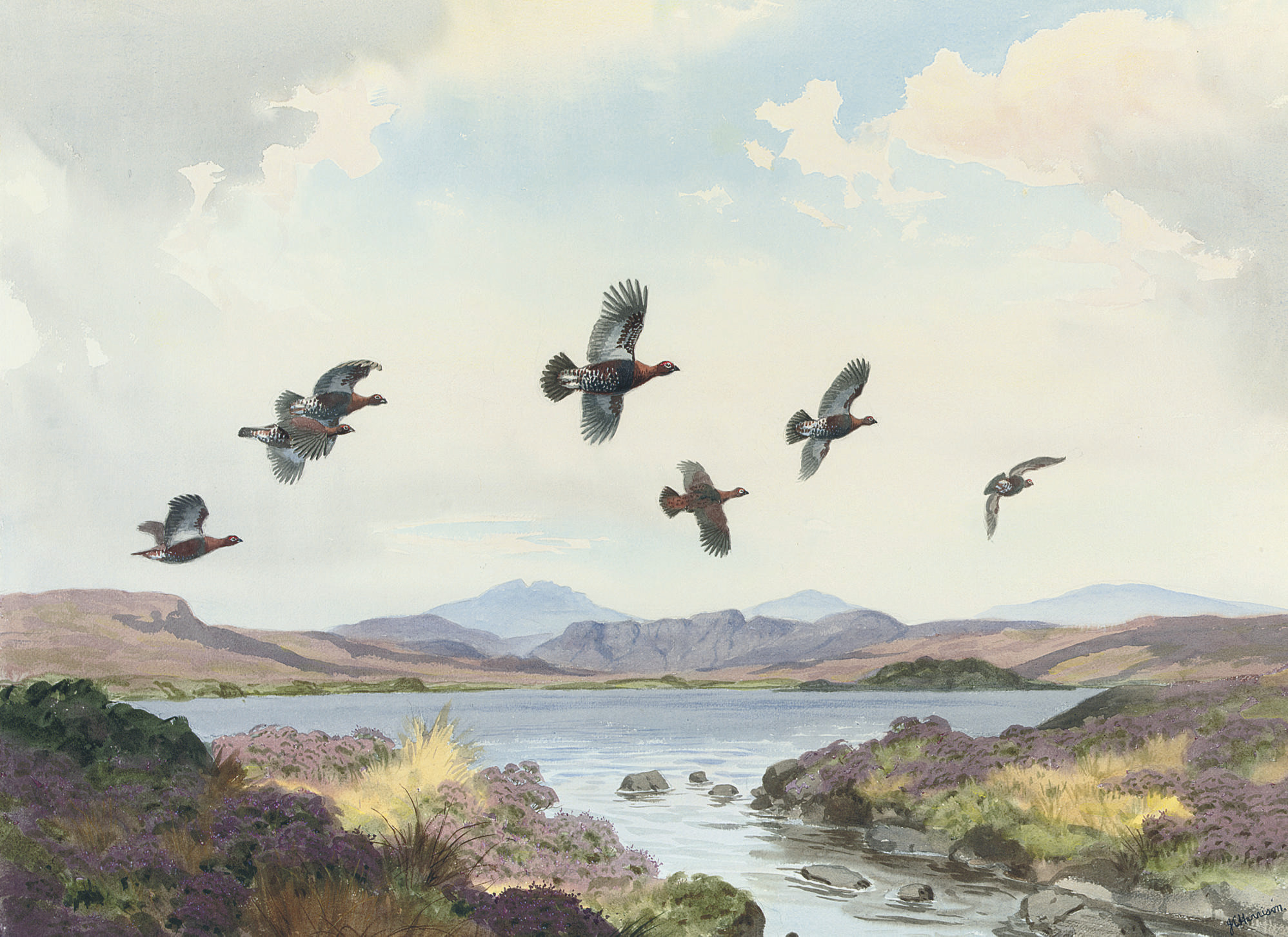 Red grouse in flight over a loch