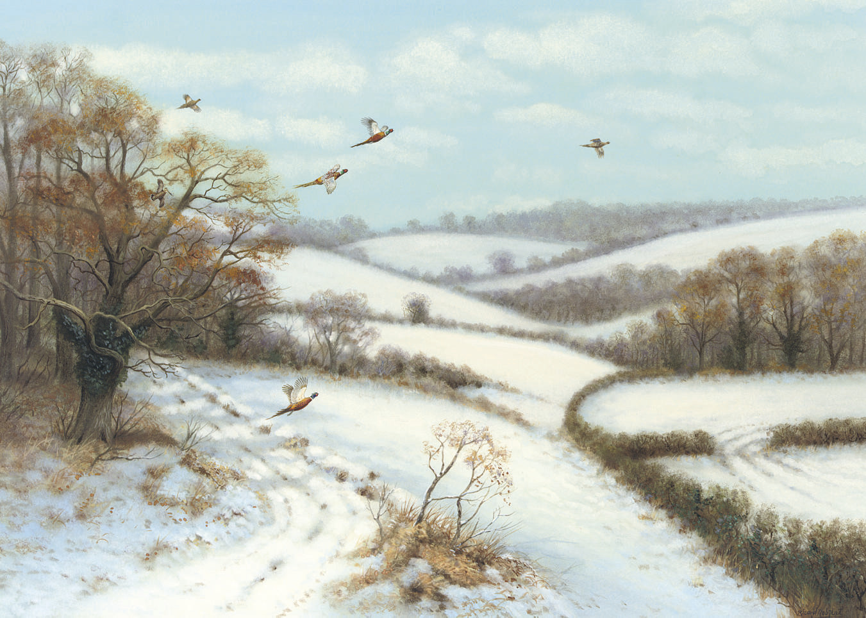 Pheasants breaking cover, Winter