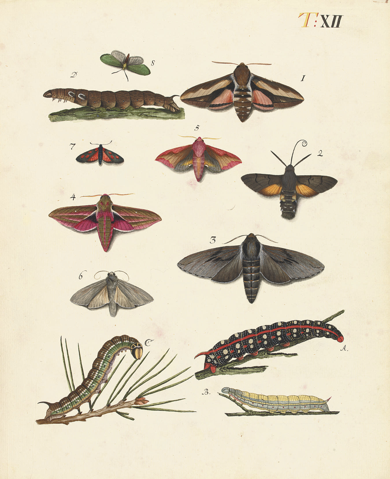 ENTOMOLOGICAL WATERCOLOURS --