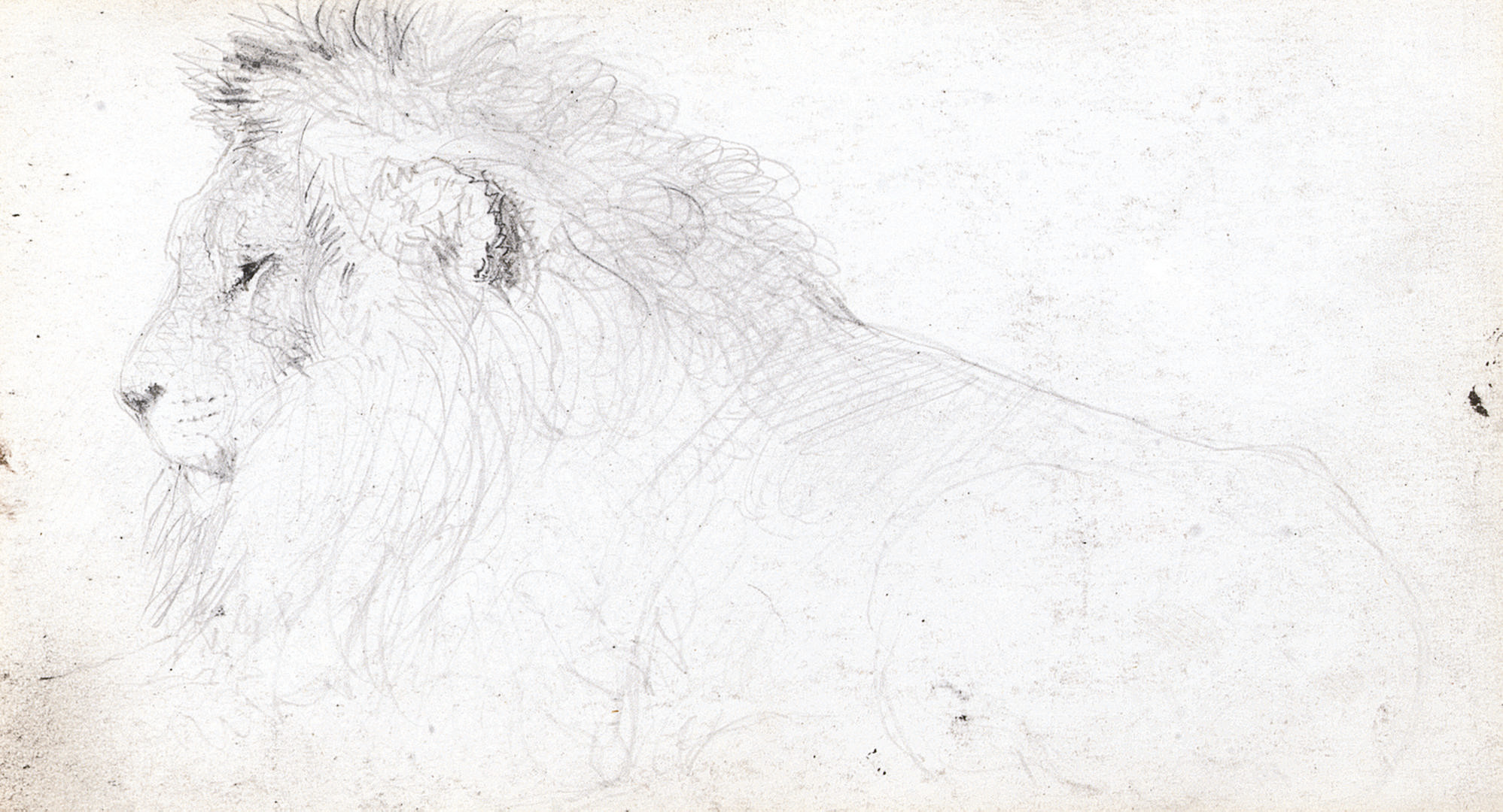 Study of a lion (recto); and Study of a bull (verso)