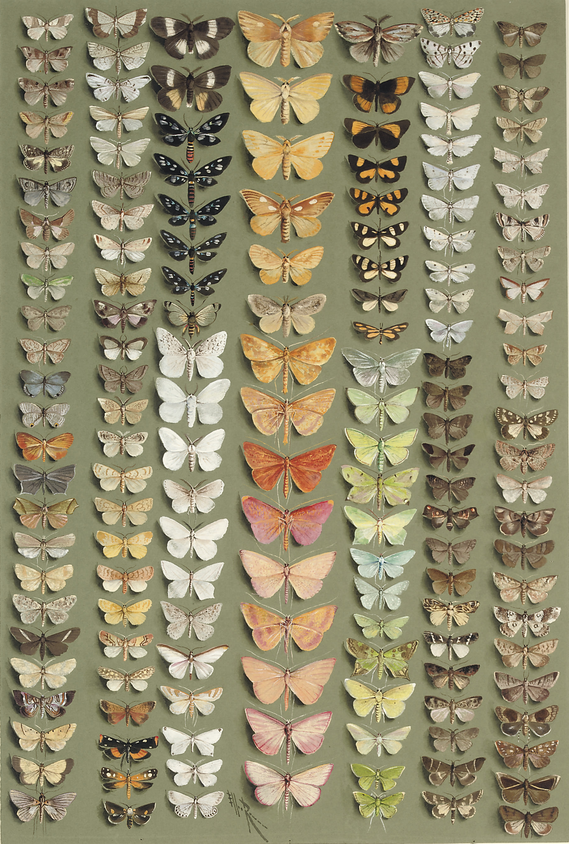 One hundred and fifty-eight medium- and small-sized moths, in seven columns. A wide range of families is represented, including the NOCTUIDAE, ARCTIIDAE, LASIOCAMPIDAE, LYMANTRIIDAE, GEOMETRIDAE, PYRALIDAE, SESIIDAE, etc.
