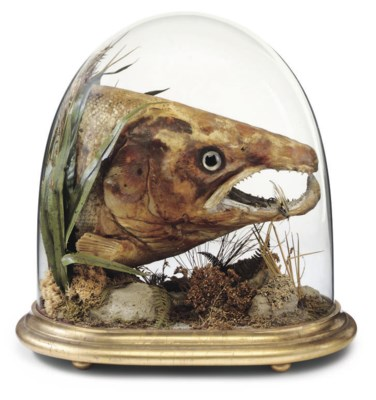 A VICTORIAN SALMON HEAD IN A G