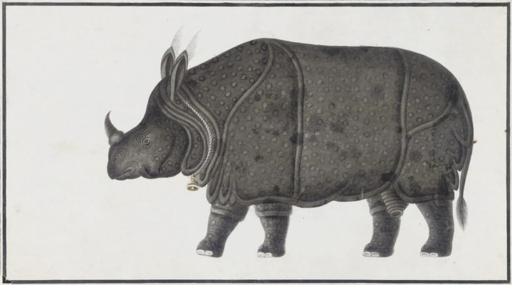 A PAINTING OF A RHINOSAURUS BY
