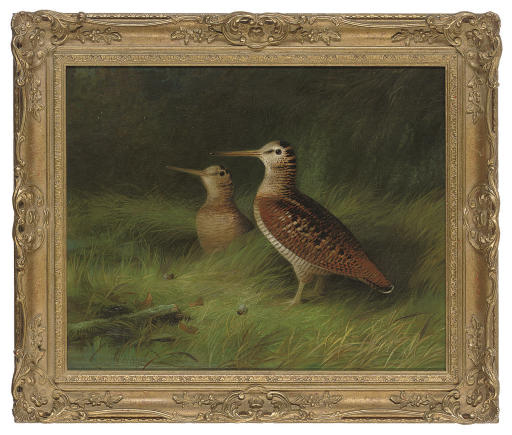 A pair of woodcock