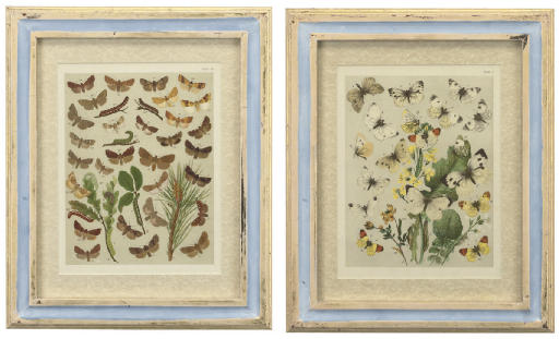 A SET OF TWENTY-FOUR HAND COLOURED LITHOGRAPHED PLATES OF EUROPEAN MOTHS AND BUTTERFLIES