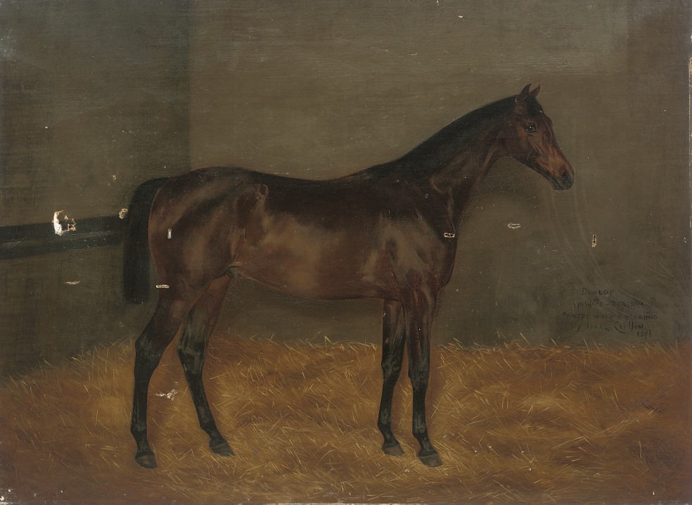 Dunlop, when a yearling