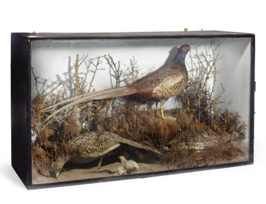 A VICTORIAN GLAZED CASE OF TWO