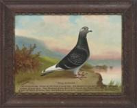 """Triumph"" a racing pigeon, ""Young Artistocrat"" a racing pigeon"