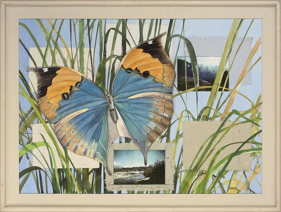 Butterfly, Nepal