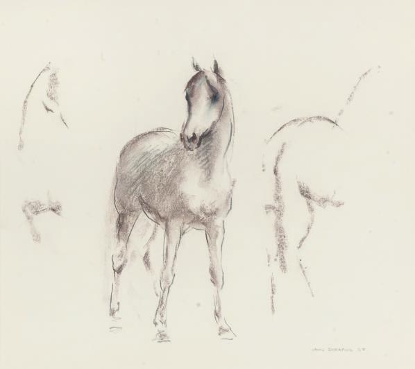 A study of an Arab foal