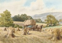 A scene from the harvest