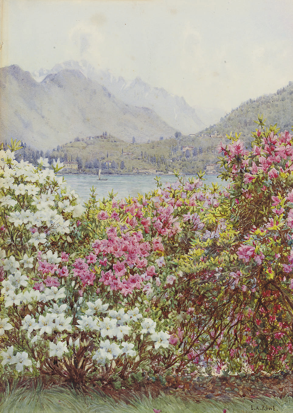 Rhododendrons, Lake Como; And o'er the sky the silvery haze of Summer drawn
