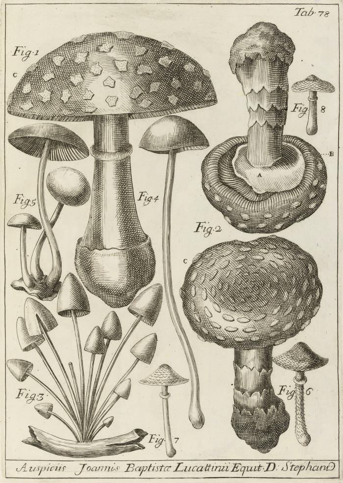 MICHELI, Pier Antonio (1679-17