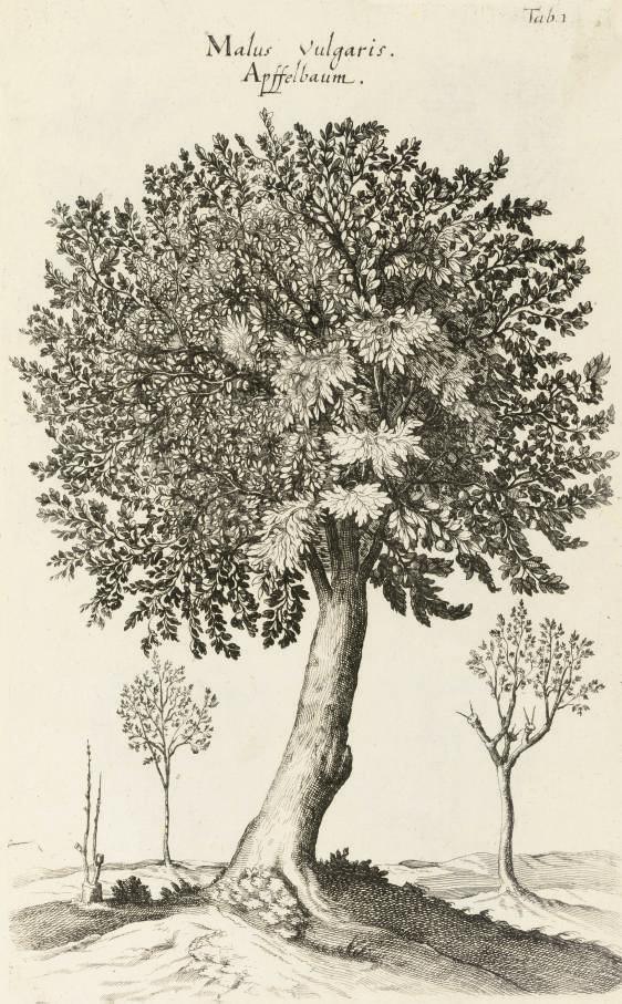 JONSTON, John (1603-75).  Hist