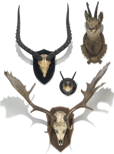 A group of four mounted horns