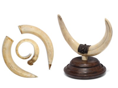 A silver-mounted ivory tusk