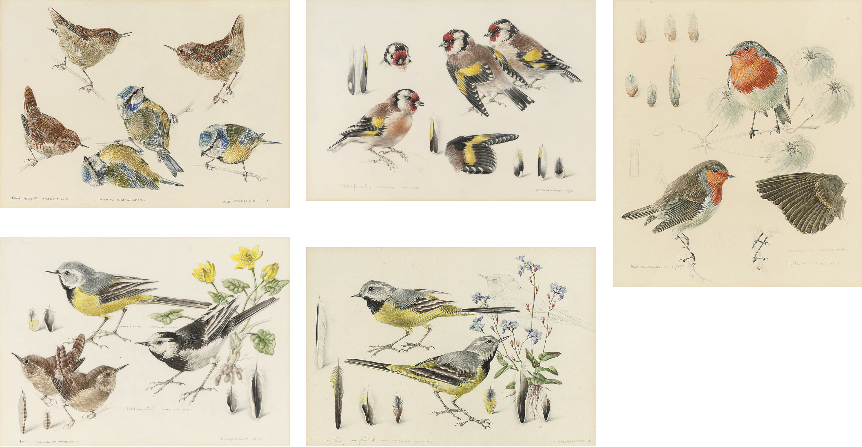 Gray Wagtails; The Common Wren; Pied Wagtails; Goldfinches; and Robins