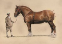 A Suffolk Punch and his groom
