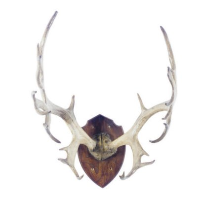 A PAIR OF STAG ANTLERS,
