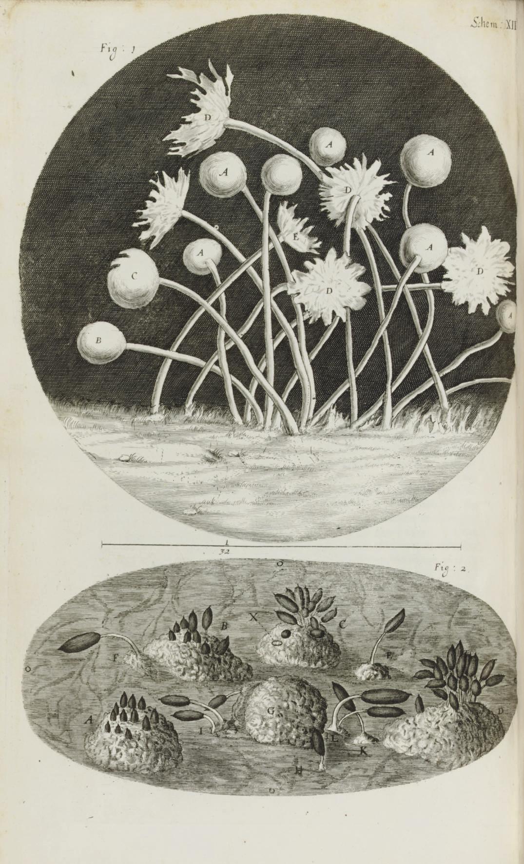 HOOKE, Robert (1635-1703). Mic