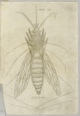 REDI, Francesco (1626-1697/98)