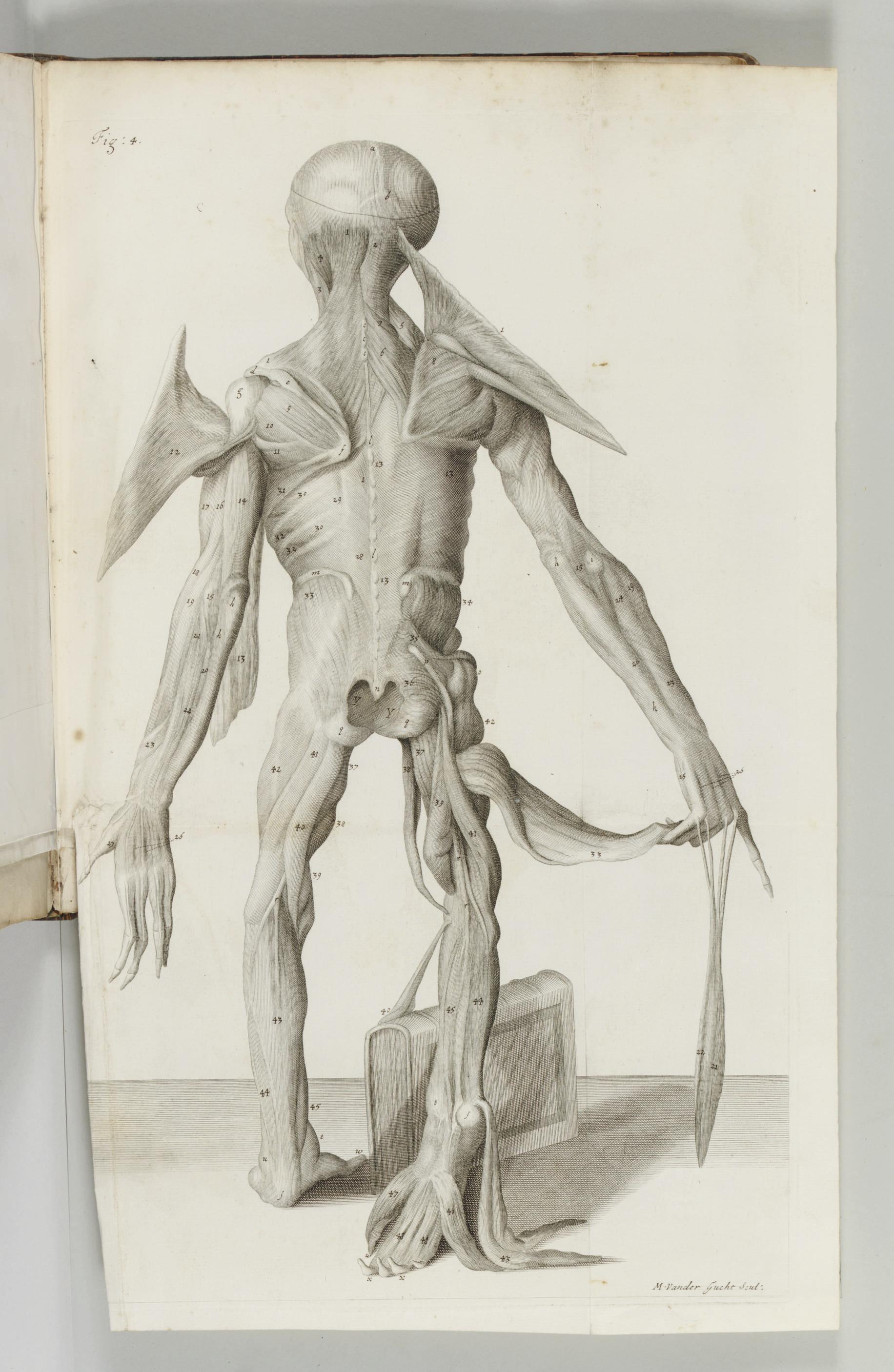 TYSON, Edward (1650-1708). Ora