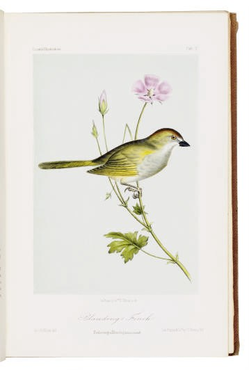 CASSIN, John (1813-69). Illust