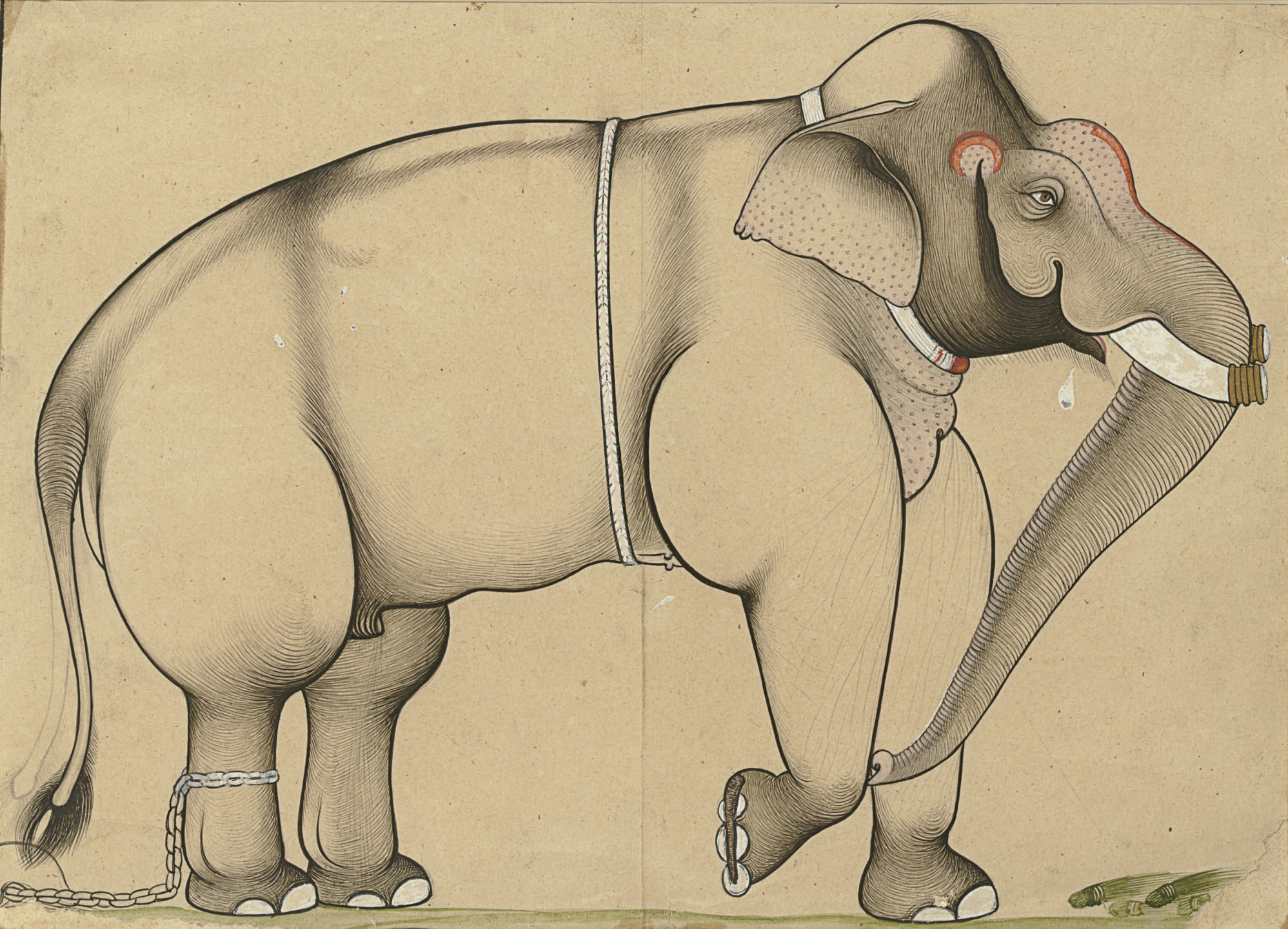 A Drawing of an Elephant