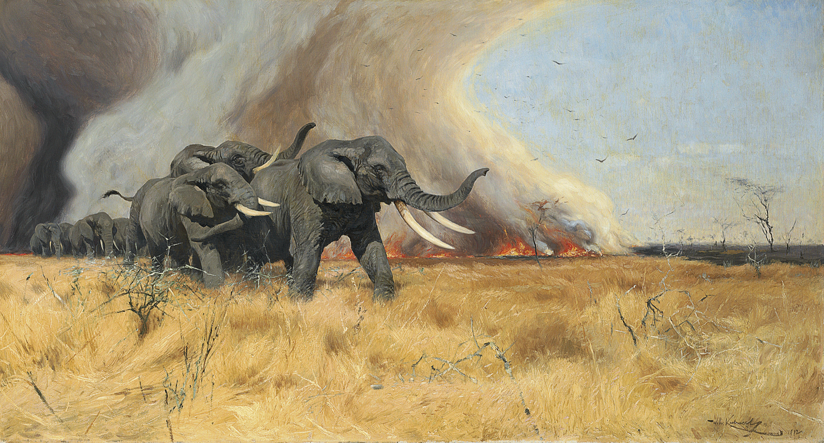 A herd of elephants fleeing from a bush fire