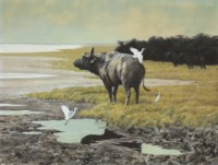 Buffalo with cattle egrets