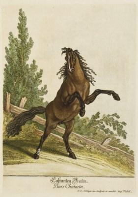 RIDINGER, Jean-Élie (1695?-176
