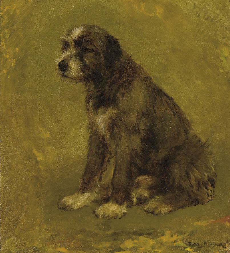 Chien de berger, assis