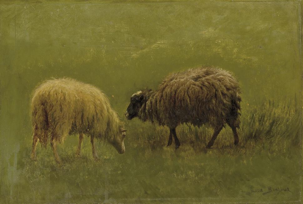 Etude de moutons