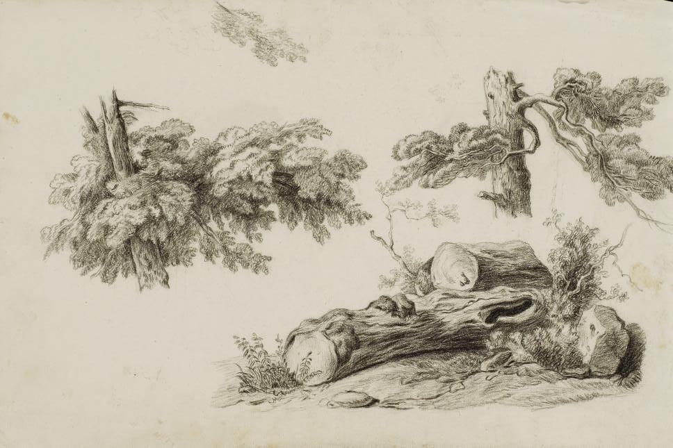 Trois études de feuillages et de troncs d'arbres