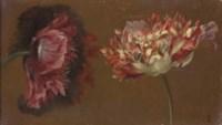 Deux fleurs de pavot roses et blanches