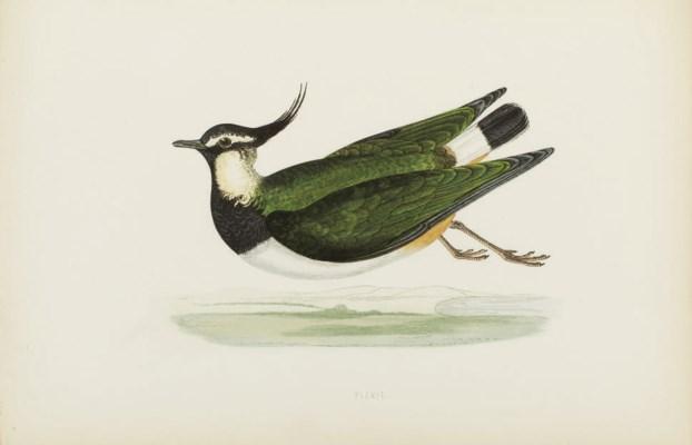 BREE, Charles Robert (1811-188