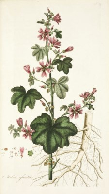 CURTIS, William (1747-1799). F