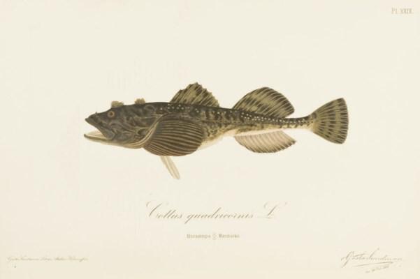 REUTER, Odo Morannal (1850-191