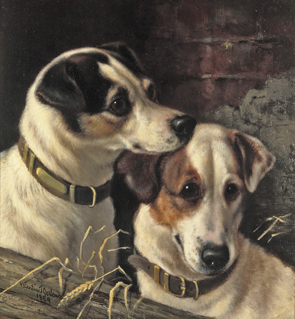 Two young terriers